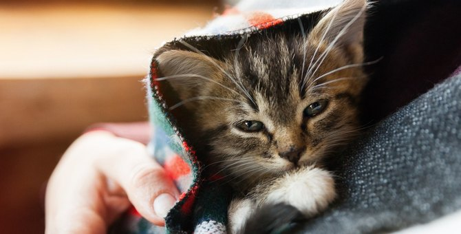 猫の見た目や行動では『気づきにくい病気』5つ!初期症状や絶対すべき対策とは?
