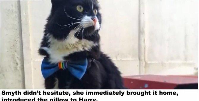 タキシード猫とそっくりな枕は、ベストフレンドに?!