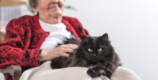 猫の加齢で表れる『老化の兆候』5つと注意点