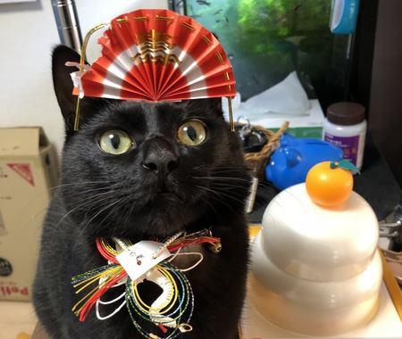 【2020年】猫用品の福袋情報!今すぐ買える福袋もご紹介
