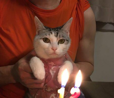 飼い主からの愛情に満たされている猫の性格や行動4つ