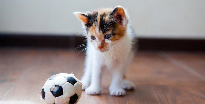 運動音痴な猫と運動が得意な猫の5つの違い