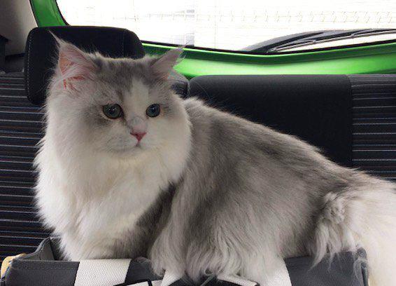 猫を動物病院に慣れさせる方法5つ