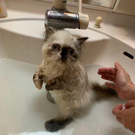お風呂上がりの猫を早く乾かすコツ6つ