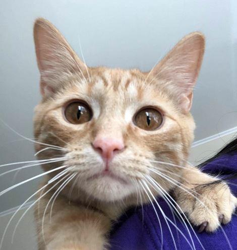 【これをされたら愛されてる】猫が好きな人限定でする行動5つ