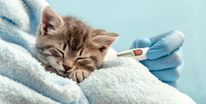 猫の平熱は何度?正しい計り方のポイント4つと低い時の対処法