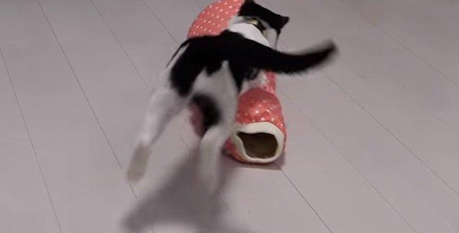 袖猫(そでねこ)で「ズサー&ジャンプ」大はしゃぎな猫ちゃんたち