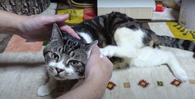 くすぐったい!自然に上がってしまう猫ちゃんの足