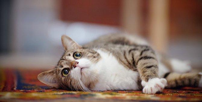 猫にはたくさんの魅力がある?!