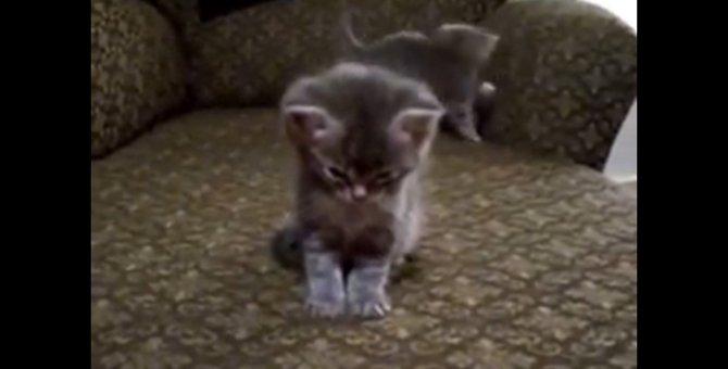 立ったままウトウト…兄弟猫が暴れる中ひとりネムネムな子猫
