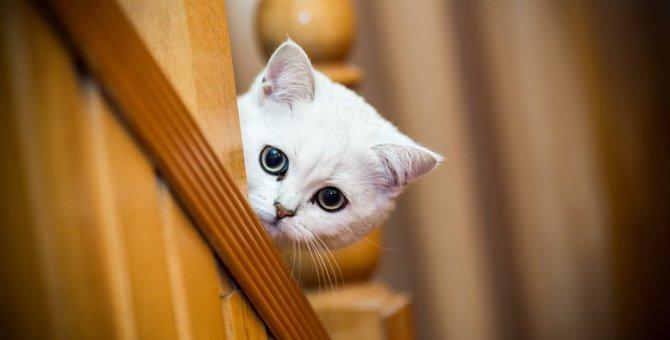 猫が『飼い主を探している』ときの行動5つ