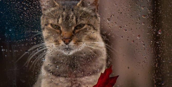猫が雨の日に暴れる理由3つ