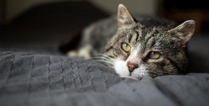 実は危険の兆候かも…猫の嘔吐に隠された病気のリスク5つ
