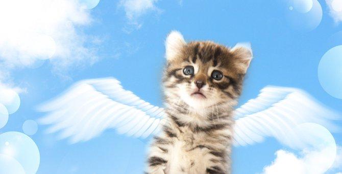 猫の年齢別『3大死亡原因』は?飼い主が絶対すべき5つの対策を紹介