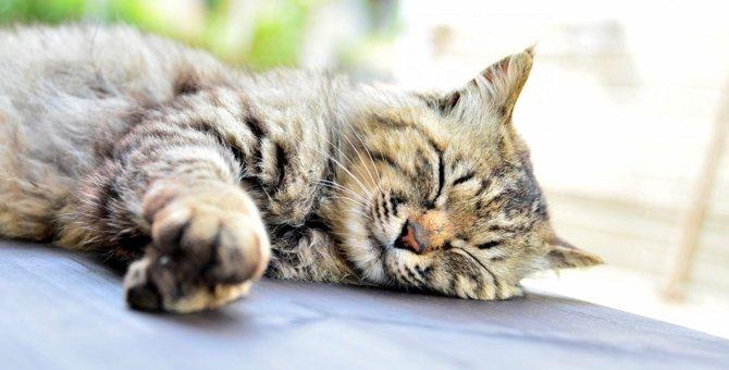 猫の体に白い粉がついているとき考えられる原因4つ