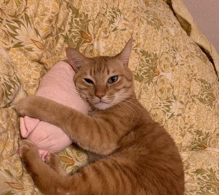 猫が『幸せだなあ』と思っているときの仕草7つ
