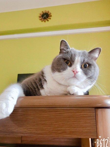 猫が近寄ってきたときにしてくれる『神対応』3選