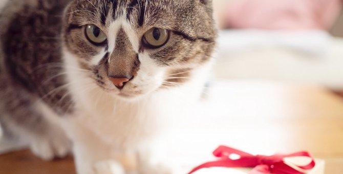 猫が飼い主に「お土産」を持ってくる心理3つ