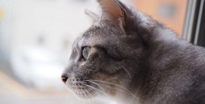 猫の『幸せレベル』を確認できるチェックリスト3つ