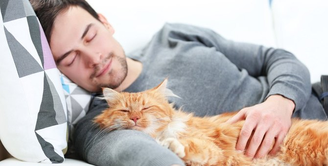 『ツンデレ猫』がしている愛情表現3選♡分かりにくさは照れ隠しかも?