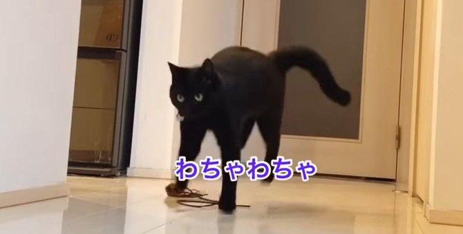 ひゃっはー!おもちゃで夢中になって遊ぶ猫さんが可愛い♡