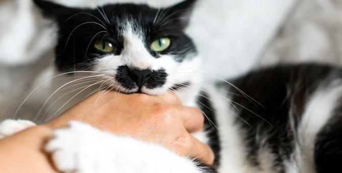 猫が人の手に咬みつく理由5つ