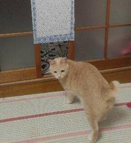100均グッズだけで猫専用出入口を作ってみた!