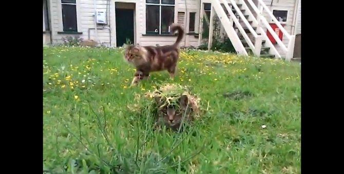 まるでスナイパー!?背中に草を乗せ、猫ちゃんを待ち伏せする猫ちゃん