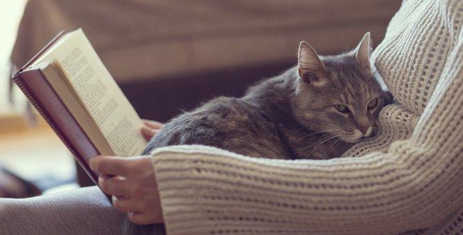 猫が飼い主さんに『甘えたい』時にみせる仕草6選