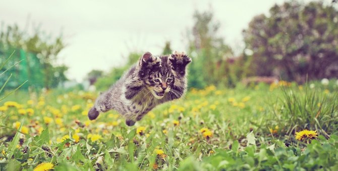 猫は時間が分かるの?ご飯の時間になると興奮する理由