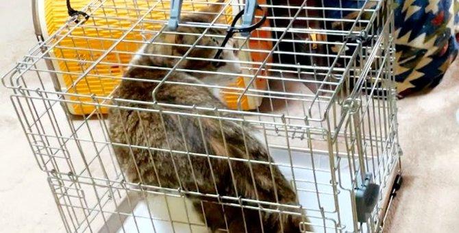 家主の急病で残された5匹の猫……悲痛に鳴き叫ぶ猫たちの未来は?