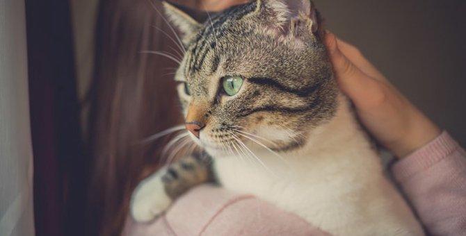 """ご近所で起きた""""多頭飼育の崩壊""""!初めての里親活動で私が得た「人と猫の繋がり」"""