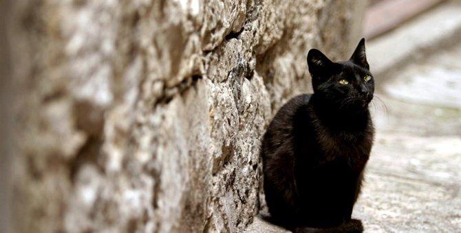 災害時、愛猫の命を守る方法とその備えについて