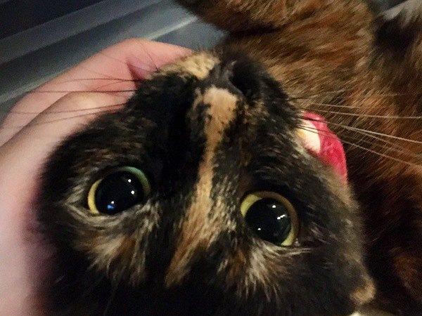 見れば見るほど可愛い♡猫の口周りのパーツの名称3つ