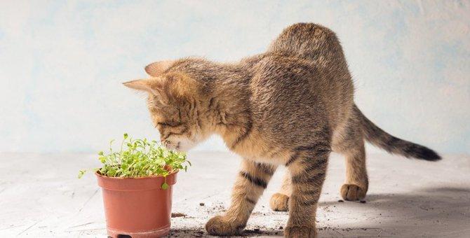 猫ってパクチー食べれる?食べた時の注意事項