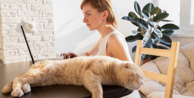 猫と距離を置くべき4つのタイミイング