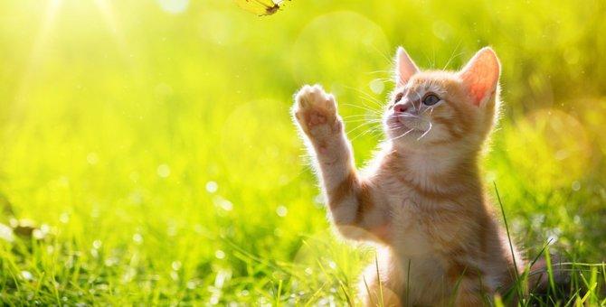 猫の不思議な仕草5選とその意味