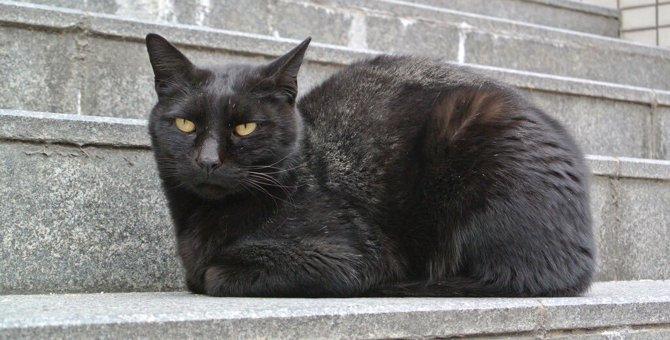 阪大生の心に寄り添うことが使命?見守ってくれた名物猫を忘れない