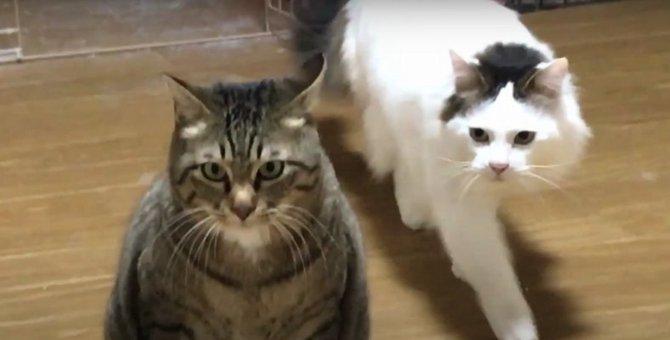 『なんて理不尽にゃんだ!』悩んじゃう猫ちゃん