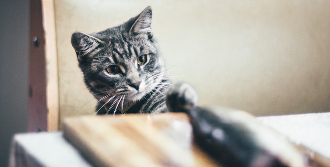 猫にうなぎを食べさせても大丈夫?食べさせる時の注意点