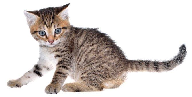 猫の寄生虫の種類やそれぞれの特徴とは