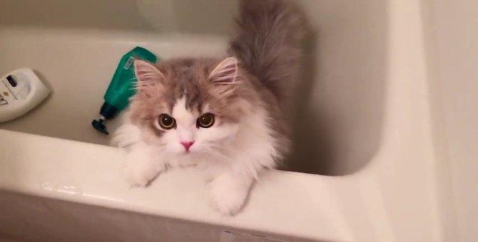今から洗われることに気付いた猫がせつない