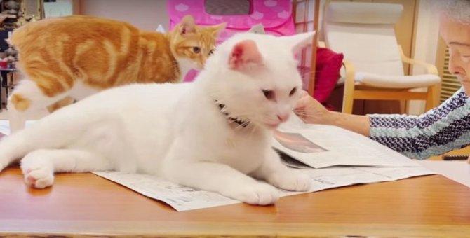 お婆ちゃんに新聞を読ませたくない猫ちゃんの新たな作戦♡