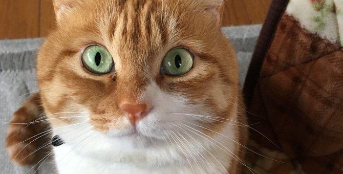 猫がワクワクする8つの瞬間