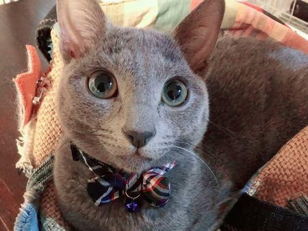 猫が『ジーンズ』を好む理由3つ
