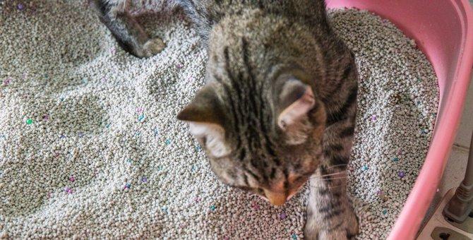 猫の『ウンチ臭』がきつくなる理由2つと予防策