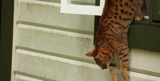 猫が脱走した時の探し方!迷子の猫を見つけ出すための5つの方法