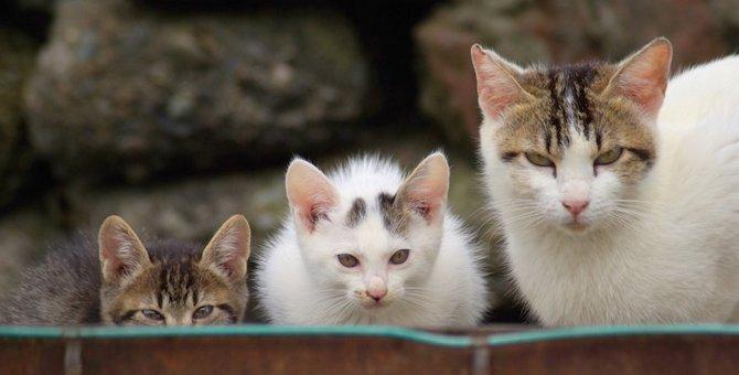猫が「新しいもの」に警戒するのはなぜ?3つの対処法