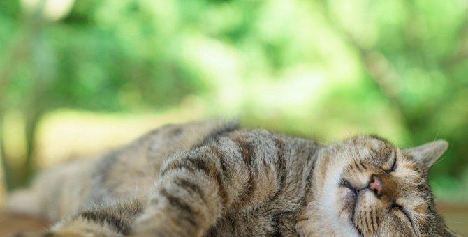 猫が喉を鳴らす理由とゴロゴロ音の意味について