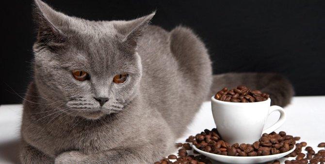 京都の猫カフェ5選!譲渡してもらえる店舗まで